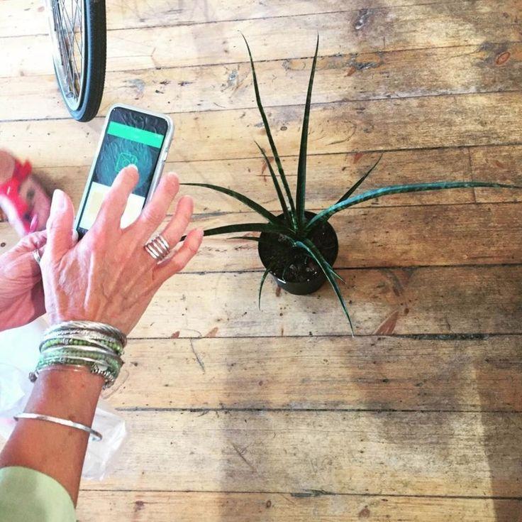 Best 25 Plant Identification Ideas On Pinterest  Tree Leaf -8490
