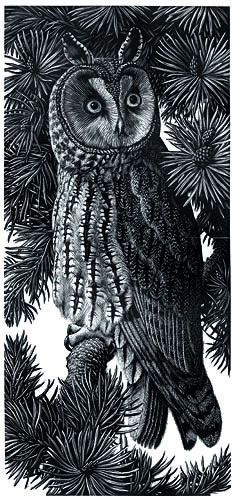 Long-eared Owl by Charles F. Tunnicliffe