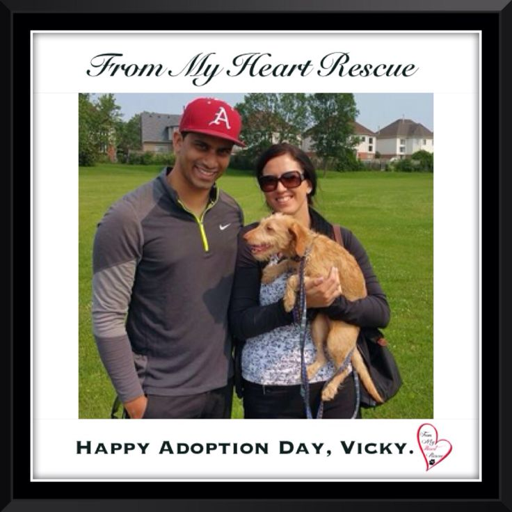 #Please ❤️+ #Pin #FMHR #FromMyHeartRescue #RescueWithoutBorders #SavingOneDogAtaTime ~ #Happy #Adoption #Day #Vicky #Aka #Piper *Many thanks to Sandra, Larisa, Tammie & Family, for all their hard work behind the scenes. *Thank you❤️ *Info, Foster, Adoption, PayPal & e-transfer: frommyheartrescue@hotmail.com *Our Vets: Brock St. Animal Hospital/FMHR 905-430-2644 *Fundraising & Volunteering: FMHRfundraising@hotmail.com    *www.frommyheartrescue.com  *Find Us: Petfinder, FB, Twitter, IG, YT, G+