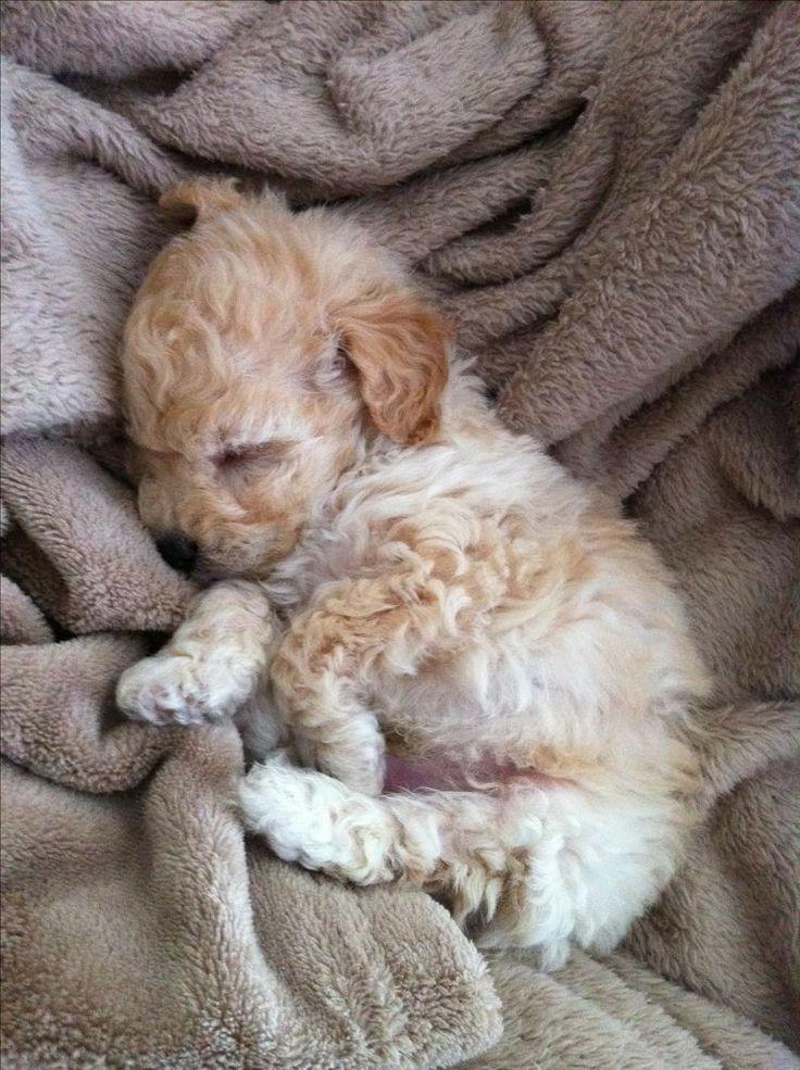 Love in a blanket