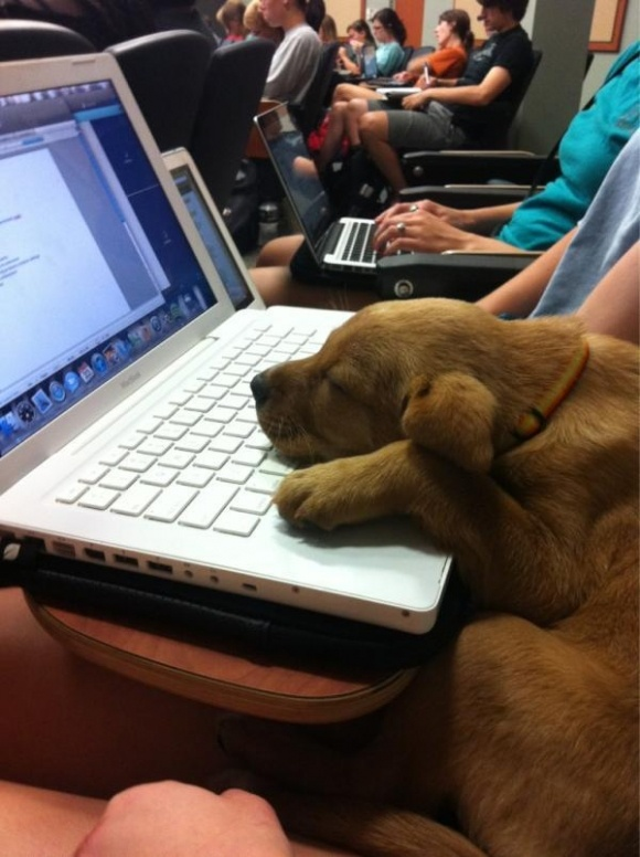Tired Dog Computer