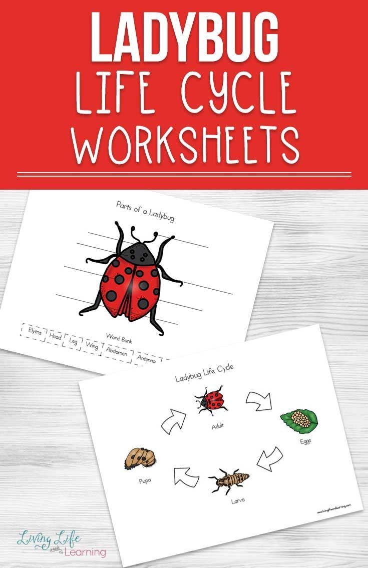Ladybug Life Cycle Worksheets For Kids Life Cycles Worksheets