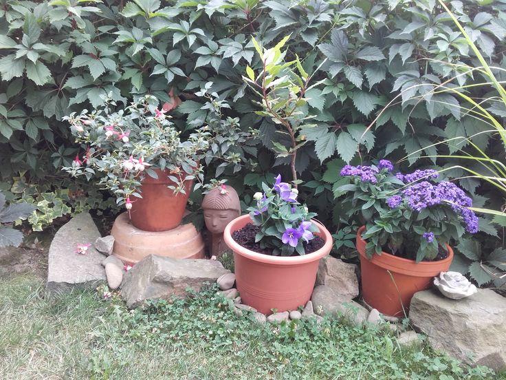 Květiny pod terasou začátek 8/2017