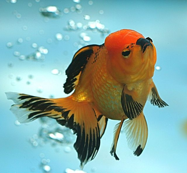 what of this gold fish would you wish Have you ever felt a sudden, passing sensation of excitement, a shudder of emotion from an epic moment of a song, or a climax of a movie that is what is called frisson, a word rooted from the french word meaning goosebumps or shiver.