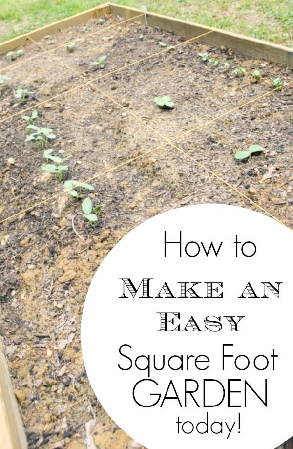Here's how to make an easy square foot garden today!  This post explains step by step what is needed and makes it simple enough for the average person to accomplish.  Great tips!