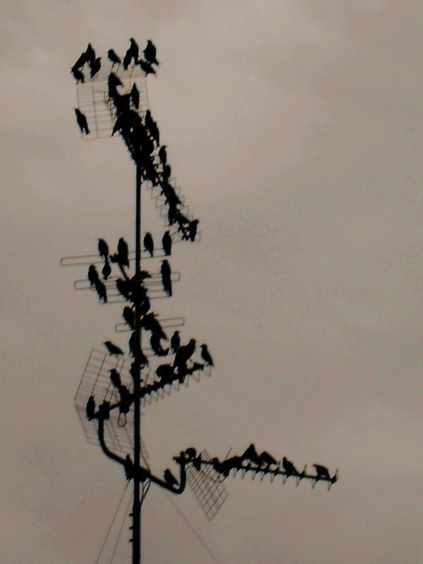 Birds in fog. Milan.