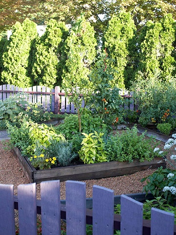 cocktail garden: limes, lemon balm, lavender, marigold, pineapple sage, chives, mint, strawberries, basil, cherry tomatoes