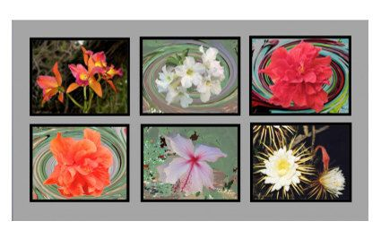 Wall Grouping of Six 8 1/2″ x 11″ Vibrant Glossy Fine Art Photos. Floral Inspirations Ready To Be Framed Without Mats. by VintageArtForLiving on Etsy https://www.etsy.com/listing/513231643/wall-grouping-of-six-8-12-x-11-vibrant