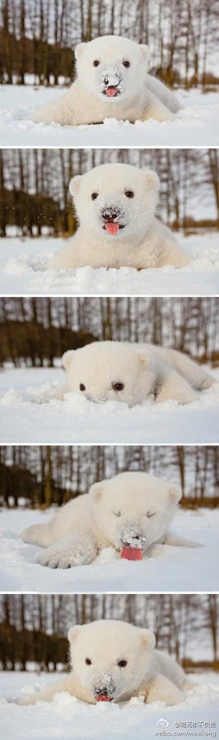 Polar bear cub sees snow for the first time.