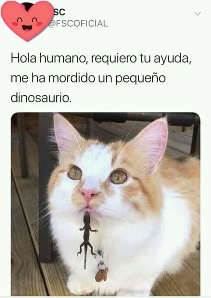 Pin By Magalli On Memes Gatunos Animal Memes Clean Funny Animal Memes Cat Memes Clean