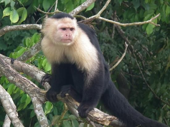 Soberania National Park - Panama City - Reviews of Soberania National Park - TripAdvisor