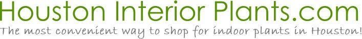 Houston's online indoor plant & pot store - Top 10 Best Indoor Plants