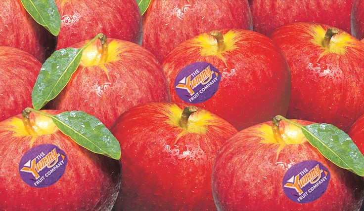 The Yummy Fruit Company | Growing Yummy Apples for New Zealand since 1870