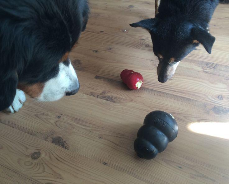 Kong Hundespielzeug ist ein Muss für jeden Hund. Und wenn Du Kong Rezepte brauchst, wir haben hier einige gesammelt