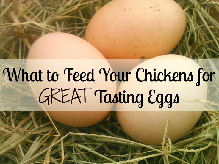What to feed your chickens for better tasting eggs. For the best tasting eggs, follow this guide. These steps will also improve your chickens' health.