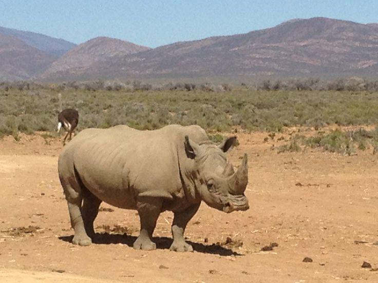 Kalahari Desert Animals | animals of the desert, Rhino ...  Kalahari Desert...