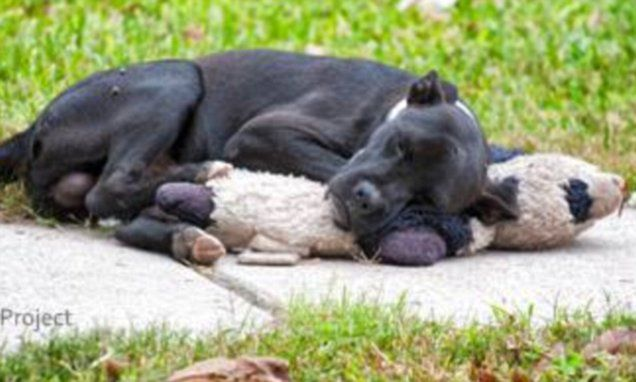 Heartbreaking picture of a dog hugging a teddy sparks controversy