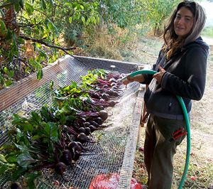 Great way to wash veggies fresh from the garden - make sure to collect water under and recycle it back into the garden
