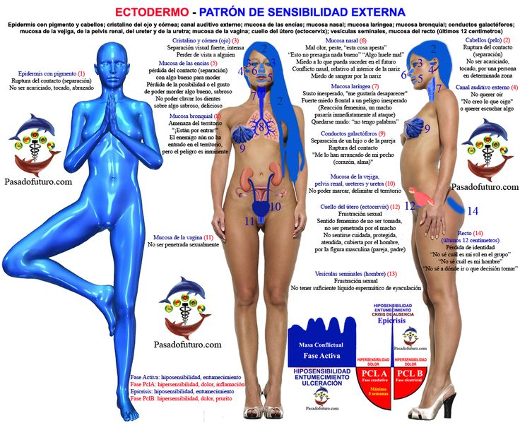 Nueva Medicina Germanica Hamer Ectodermo NMG Leyes Biologicas Sensibilidad…