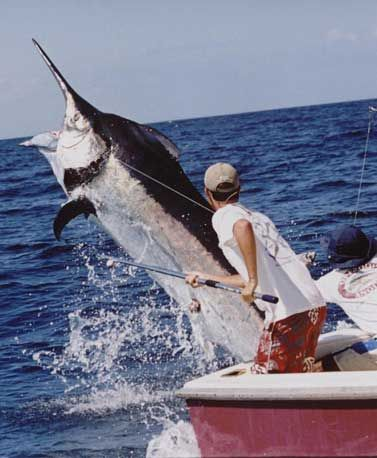 Sport Fishing   http://costarica4u.com/san-jose-costa-rica-one-day-tours