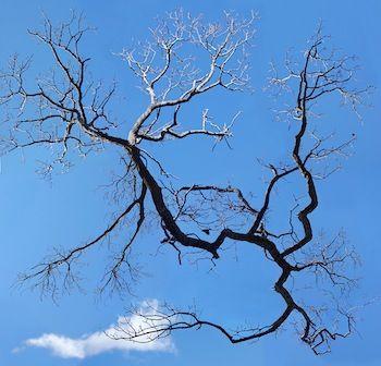 Jae Hoon Lee Space Tree 2003