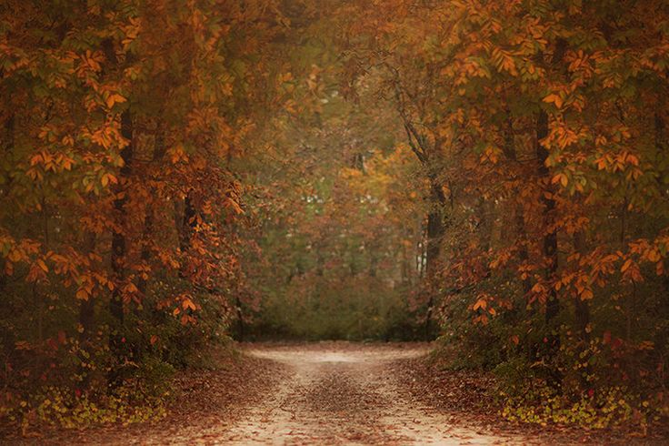 15 Best KCC Fall Digital Backgrounds Images On Pinterest