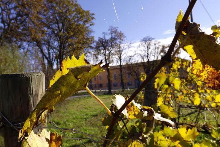 Vista dai filari in autunno