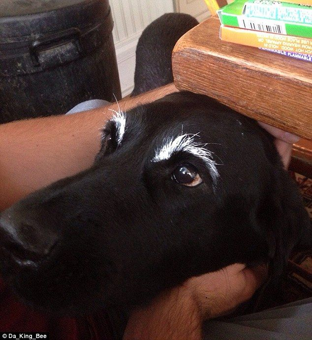 One owner looks as though they have tip-exed their dog's eyebrows to make them really stan...