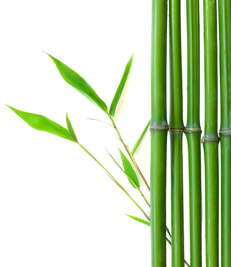 Is Bamboo A Viable Alternative To Carbon Fibre?  #Bamboo #Carbon Fibre #Alternative #Green