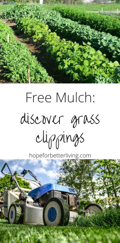 Free Mulch Near Me Discover Prepare Grass Clippings Garden