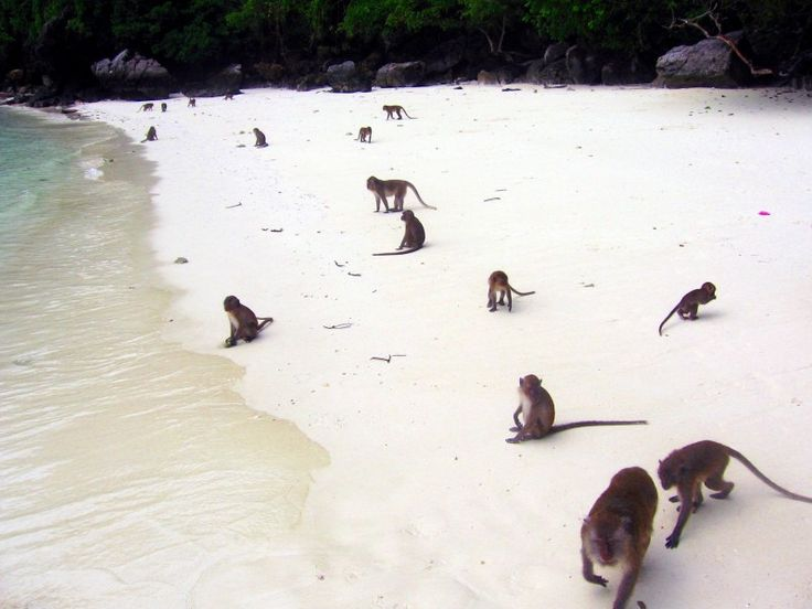 monkey beach Monkey beach questions and answers the question and answer section for monkey beach is a great resource to ask questions, find answers, and discuss the novel ask your own question.