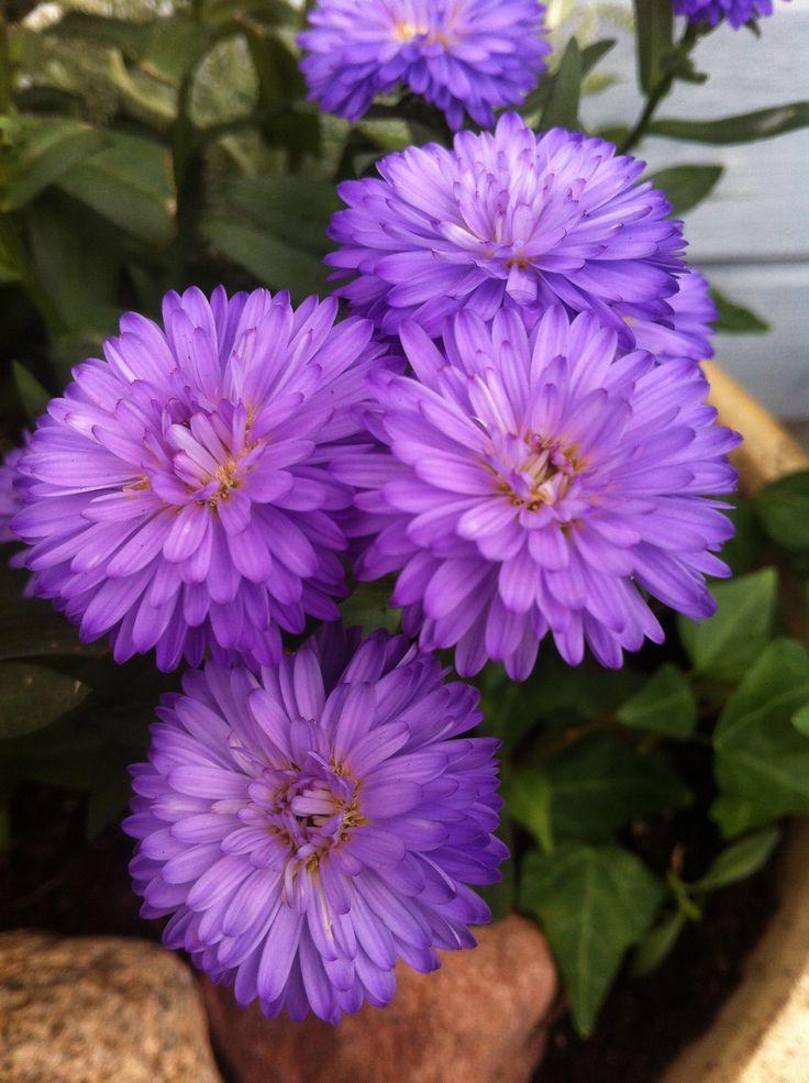 Flowers close up