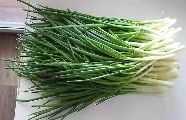 Хотите всегда иметь свежую зелень? Тогда начните выращивать её у себя дома! Предлагаем удивительный способ выращивания зеленого лука, где вам не потребуется земля. Выращенный таким способом лук получается действительно вкусным и полезным. И вам не нужно возиться с горшками и банками! Зеленый лук —