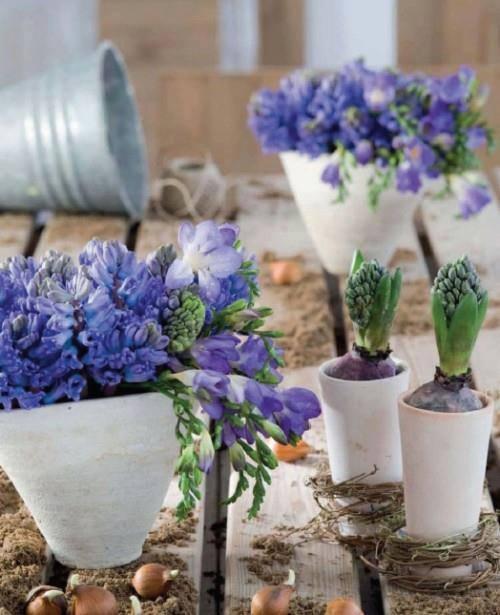 floral bulbs