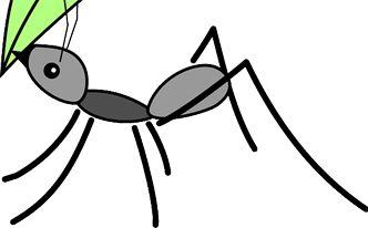 M s de 25 ideas incre bles sobre como eliminar chinches en for Como acabar con las hormigas del jardin