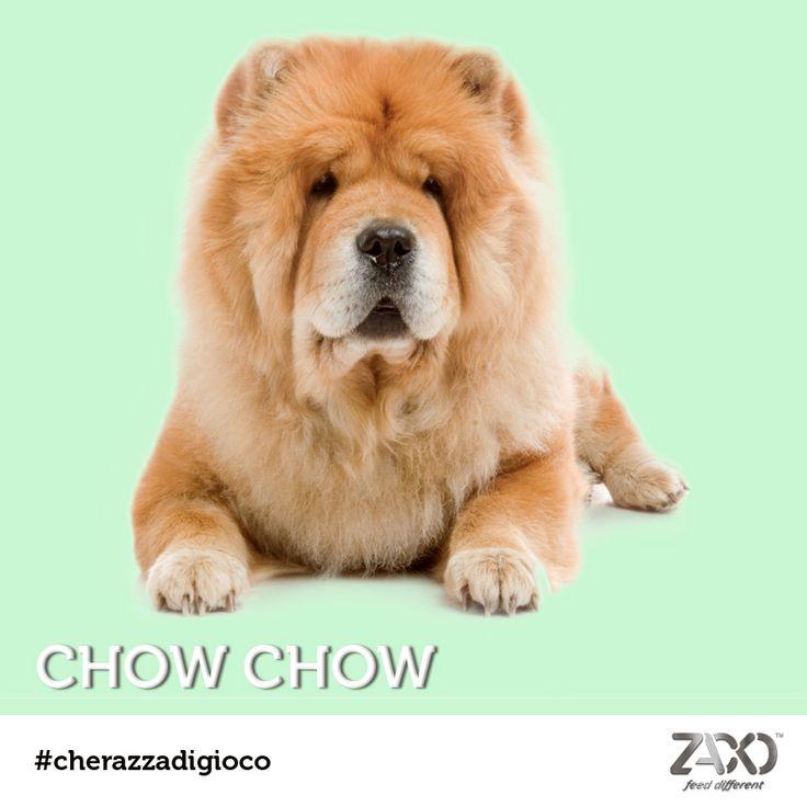 Ecco la soluzione: un morbidissimo Chow Chow!  Ha origini cinesi, è grande, è peloso, è simpatico e dal carattere forte. Ma una particolarità lo contraddistingue: la sua lingua tende al BLU! Lo sapevate?  Il prossimo appuntamento con #cherazzadigioco è lunedì prossimo :)