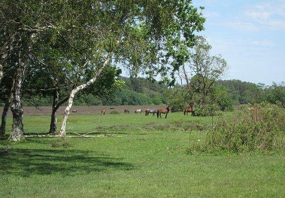 Q+A on forest landscapes: researcher crowdsources questions | Global Landscapes Forum #landscapes