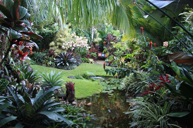 Tropical garden by dennis hundscheidt stunning garden on for Garden designs queensland