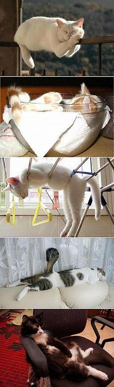 Почему в квартире должен жить кот.