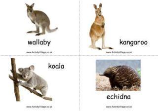 Australian Animals Flashcards