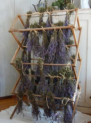 Cool Herb Drying Rack