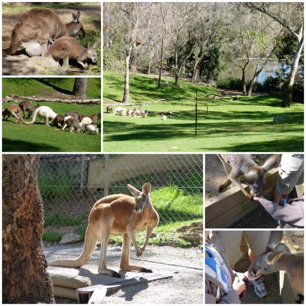 Gorge Wildlife Park | Cudlee Creek | Play and Go