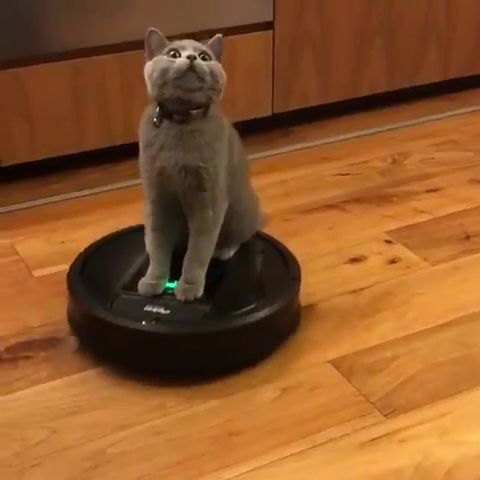 What's The Best Robot Vacuum For Pet Hair? | Cute Cats