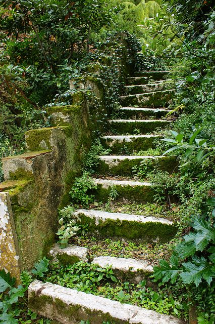 Old staircase overtaken by Mother Nature