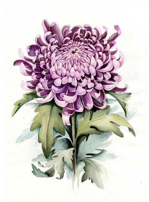 Watercolor Botanical Illustration. Chrysanthemum. Art от Limkina
