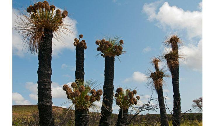 619 best images about native plants on pinterest