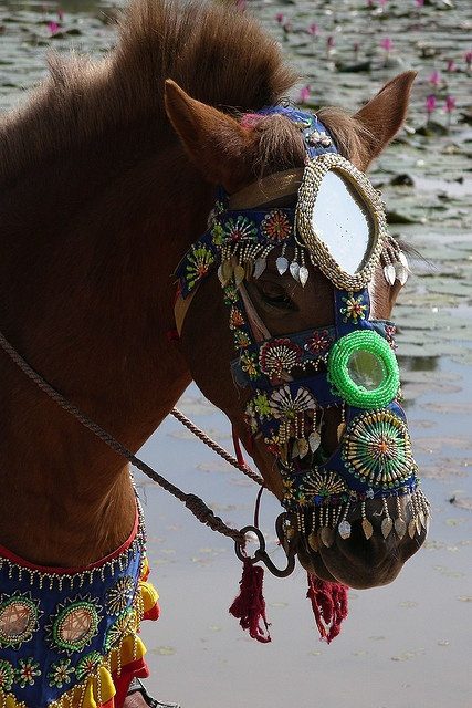 Fancy bridal embroidered with mirrors in Angkor WatFancy Bridal, Bridal Embroidered, Gypsy With Horses Art, Breast Collars, Beads Embroidery, Cambodian Hors, Collars Embroidered, Angkor Wat, Animal