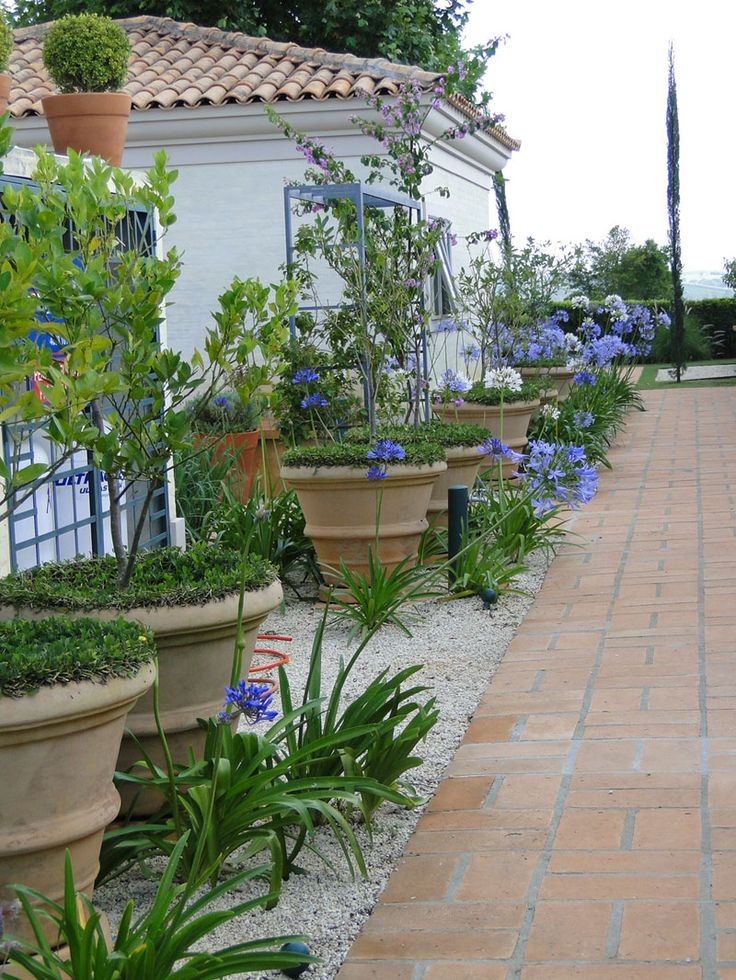 Agapanthus and large terracotta pots - gravel adn brick path