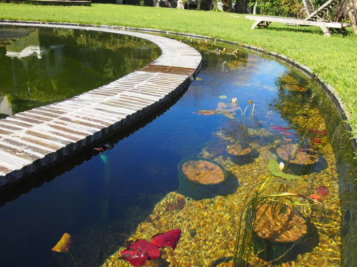 12 best koi ponds images on pinterest koi ponds water for Koi pond you can swim in