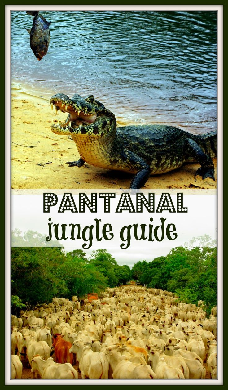 Complete guide to Pantanal jungle trek, Brazil